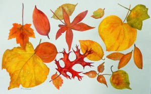 Pam's leaves